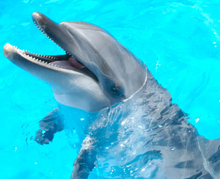 Common bottlenose dolphin(NAMI)